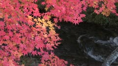 Koyo, autumn leaves and running water in Japan Stock Footage