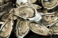 oysters on a silver platter - stock photo