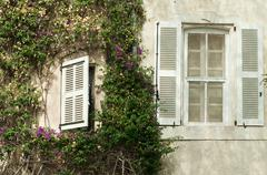 windows and wall with ivy - stock photo