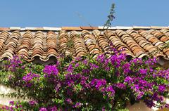 Tile roof and purple flowers Stock Photos