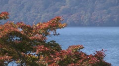 Scenery of Autumn leaves in Japan Stock Footage