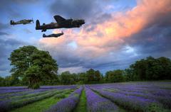 Stunning atmospheric sunset over vibrant lavender fields in summer Stock Photos