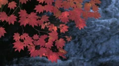 Koyo , red leaves in Japan Stock Footage