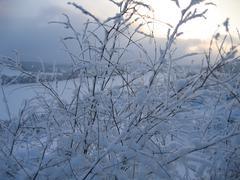 winter plants - stock photo