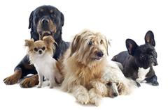 Stock Photo of five dogs