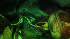Moray fish underwater close-up Stock Footage
