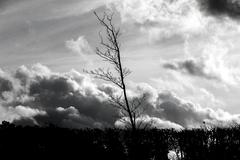 silhouette of bare tree  in front of dramatic sky - stock photo