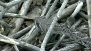Time Lapse Slithering Rattlesnake Stock Footage