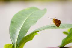 Resting Moth Stock Photos