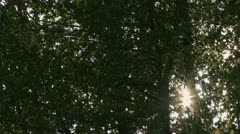Blazing Sun Stars Shining through Waving Tree Branches Stock Footage