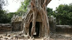Banyan Tree at Ta Som Stock Footage