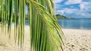 Palm leaf on a beautiful beach background Stock Footage