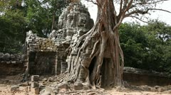 Banyan Tree at Ta Som Stock Footage