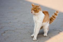Agressive cat Stock Photos