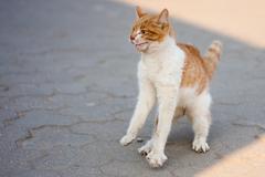 agressive cat - stock photo