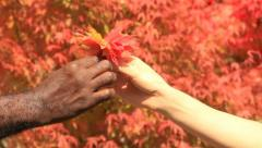 Man gives woman autumn leaves, closeup. Stock Footage