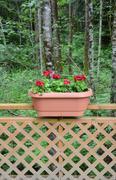 Red geranium planter Stock Photos