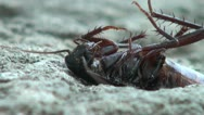 Cockroach poisoned food and is dying in real time Stock Footage