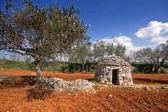Red Istrian soil, stonemade shelter and olive trees Stock Photos