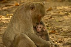 Babie monkey Stock Photos