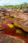 A Multicolored River in Colombia Stock Photos