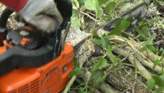 A chainsaw cutting a fallen tree branch Stock Footage