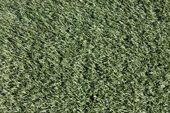 Close-up of artificial turf on sports field Stock Photos