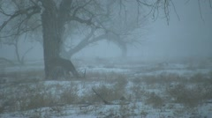 Whitetail Buck in Snowstorm Stock Footage