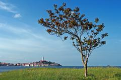View to Rovinj and the tree Stock Photos