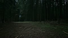 creepy forest steadicam - stock footage