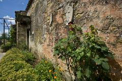 Old wall with the garden with roses and everlasting - stock photo