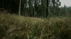 Forest steadicam Stock Footage