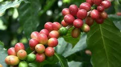 Coffee beans (closeup) Stock Footage