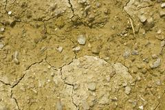 Fruitful yellow soil in Motovun area - stock photo