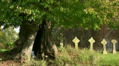 Old Lime Tree on a Cemetery in Mecklenburg - Northern Germany Stock Footage