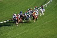 Stock Photo of horce racing