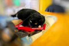 B/W Cat sunning on Table - stock photo