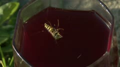 Wasp in compote Stock Footage