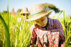 working in farm - stock photo