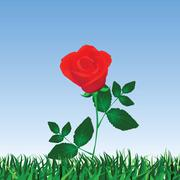 Rose isolated on white Stock Illustration