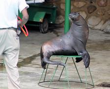 Seal looking at handler Stock Photos