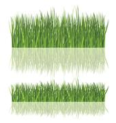 fresh grass isolated - stock illustration