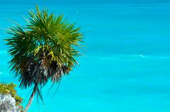 Palm tree with ocean background Stock Photos