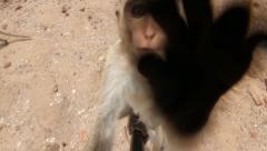 Monkey touching camera Stock Footage
