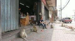 Man sitting on sidewalk overrun with monkeys Stock Footage