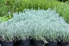 homegrown seedling pots - stock photo
