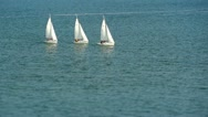 Stock Video Footage of Three White Sail Boats Tilt Shift 1 HD