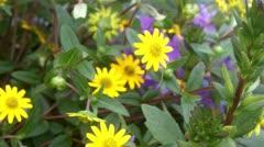 Pretty Flowers - stock footage