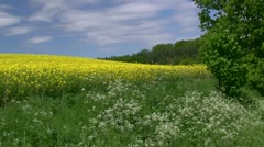Beautiful Canola Field in Mecklenburg - Northern Germany - stock footage