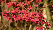A shrub with red flowers Stock Footage